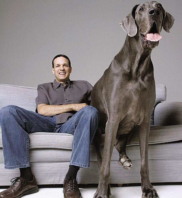 Worlds Tallest Dog ever recorded