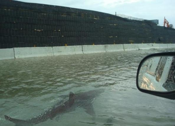 Sharks on street