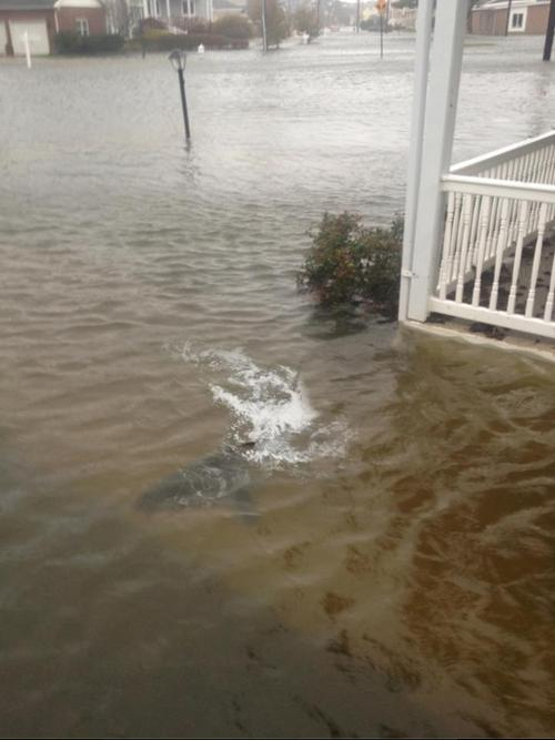 Shark found in the front yard