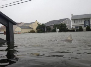 sharks in the street of New Jersey