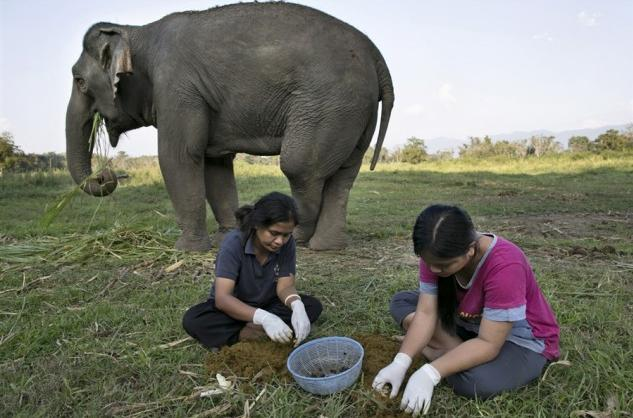 Worlds Most Expensive Coffee Elephant Poop Coffee fills a $50 cup