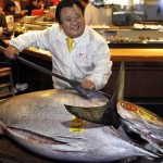 Giant Tuna Sold for $1.7 million in Japan